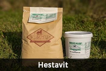 Hestavit